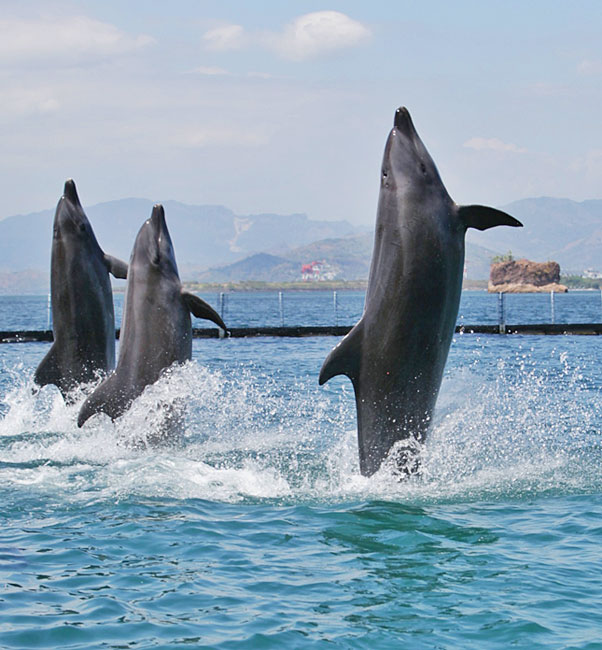 dolphins-friends-show-3