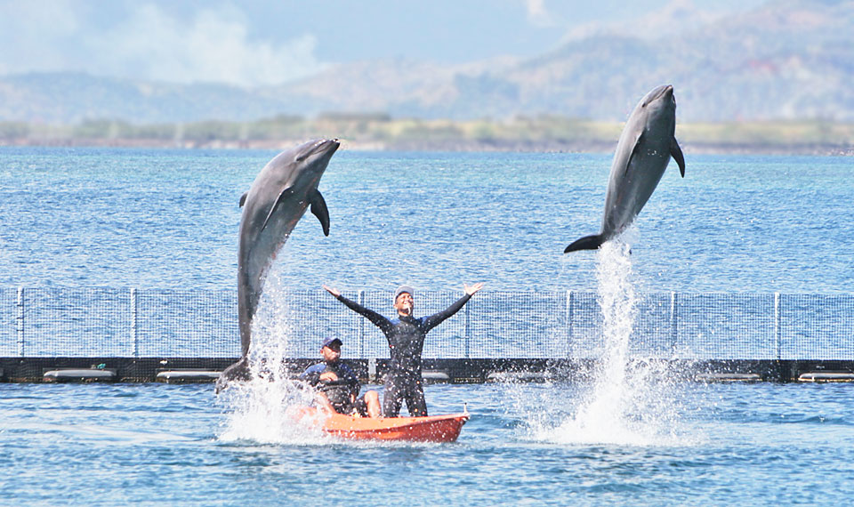 dolphins-friends-show-6
